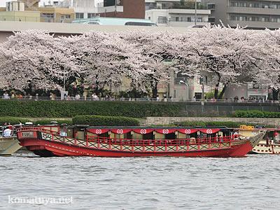 4月1日墨堤の桜